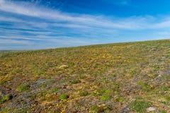 Νότια ακτή Novaya Zemlya Στοκ εικόνες με δικαίωμα ελεύθερης χρήσης