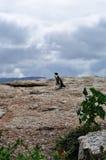 Νότια Αφρική, δυτικό ακρωτήριο, χερσόνησος ακρωτηρίων Στοκ Εικόνα