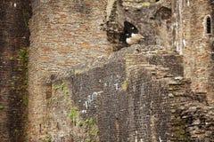 Νότια Ουαλία του Castle Caerphilly Στοκ φωτογραφίες με δικαίωμα ελεύθερης χρήσης