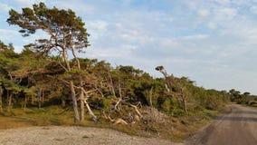 Νότια παράλια της Gotland Στοκ Φωτογραφίες