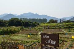 Νότιο αγρόκτημα της Κίνας με τα βουνά Στοκ εικόνα με δικαίωμα ελεύθερης χρήσης