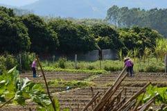 Νότιο αγρόκτημα της Κίνας με τα βουνά Στοκ Εικόνες