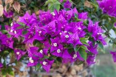 Νότιο λουλούδι Στοκ εικόνα με δικαίωμα ελεύθερης χρήσης