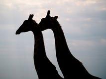 Νότιο Giraffe Στοκ φωτογραφία με δικαίωμα ελεύθερης χρήσης