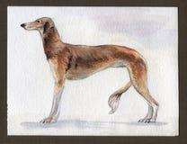 Νότιο greyhound που χρωματίζεται ρωσικό στο watercolor στο σχεδιάγραμμα στοκ φωτογραφία με δικαίωμα ελεύθερης χρήσης