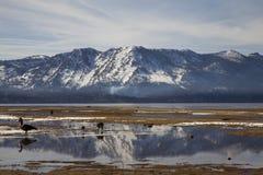 νότος λιμνών tahoe Στοκ Εικόνες