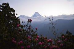 Νότος Annapurna, μια αιχμή Himalayan Στοκ φωτογραφία με δικαίωμα ελεύθερης χρήσης