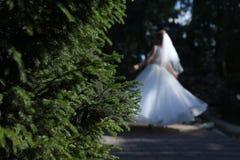 Νύφη που περπατά σε μια πράσινη αλέα Στοκ Εικόνες