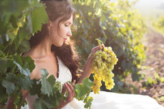 Νύφη σε έναν αμπελώνα, φθινόπωρο Στοκ Φωτογραφία