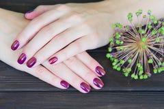 Νύχια και λουλούδια Manicured Στοκ εικόνες με δικαίωμα ελεύθερης χρήσης
