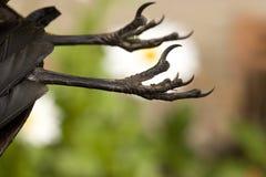 νύχια πουλιών Στοκ Εικόνες