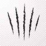 Νύχια τεράτων Σημάδι γρατσουνιών νυχιών Ζωική γρατσουνιά στο διαφανές υπόβαθρο Έγγραφο αποκομμάτων r ελεύθερη απεικόνιση δικαιώματος