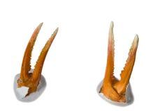 νύχια Στοκ φωτογραφίες με δικαίωμα ελεύθερης χρήσης
