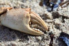 Νύχι καβουριών Στοκ φωτογραφία με δικαίωμα ελεύθερης χρήσης