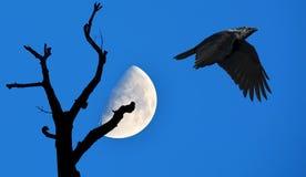 Νύχτα αποκριών με το πετώντας κοράκι Στοκ Εικόνες