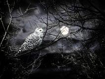 νύχτα αποκριών Στοκ εικόνες με δικαίωμα ελεύθερης χρήσης