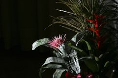 νύχτα λουλουδιών στοκ φωτογραφία με δικαίωμα ελεύθερης χρήσης