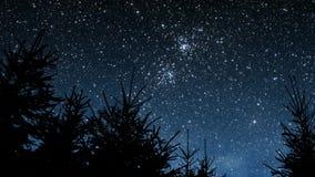 Νύχτα στα ξύλα απόθεμα βίντεο