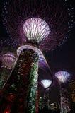 Νύχτα στη Σιγκαπούρη Στοκ εικόνες με δικαίωμα ελεύθερης χρήσης