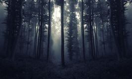 Νύχτα στο υπερφυσικό δάσος με την ομίχλη Στοκ φωτογραφία με δικαίωμα ελεύθερης χρήσης
