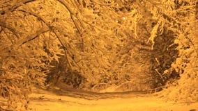 Νύχτα χιονιού απόθεμα βίντεο