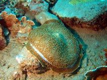 ξένιος χ/υ anemone Στοκ φωτογραφία με δικαίωμα ελεύθερης χρήσης