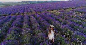 Ξένοιαστοι περίπατοι κοριτσιών στους ευώδεις τομείς lavender Εναέριος βλαστός απόθεμα βίντεο
