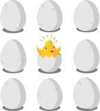 Ξέσπασμα νεοσσών του αυγού Στοκ φωτογραφία με δικαίωμα ελεύθερης χρήσης