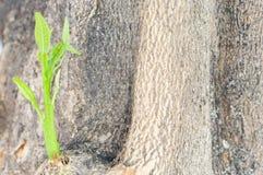 Ξέσπασμα του κλάδου του δέντρου Στοκ φωτογραφία με δικαίωμα ελεύθερης χρήσης