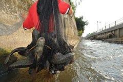 Ξέσπασμα ψαριών Plecostumus (sucker ψάρια) στον ποταμό, Ταϊλάνδη. Στοκ Φωτογραφία