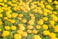 ξέφωτο λουλουδιών κίτρινο Στοκ φωτογραφία με δικαίωμα ελεύθερης χρήσης
