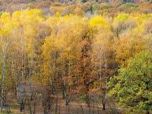 Ξέφωτο στο άλσος σημύδων στο ζωηρόχρωμο δάσος στοκ φωτογραφία με δικαίωμα ελεύθερης χρήσης