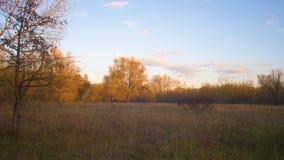 Ξέφωτο στο δάσος φθινοπώρου, δέντρα τα κίτρινα φύλλα που φωτίζονται με από τον ήλιο φιλμ μικρού μήκους