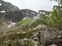Ξέφωτο τοπίων με τα λουλούδια και τις πέτρες Στοκ εικόνες με δικαίωμα ελεύθερης χρήσης