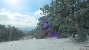 Ξέφωτο του χιονισμένου δάσους το χειμώνα απόθεμα βίντεο