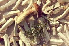 Ξήρανση του δάσους delicates Στοκ Εικόνα