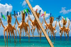 Ξήρανση του χταποδιού σε Chania, Κρήτη, Ελλάδα Στοκ Φωτογραφίες