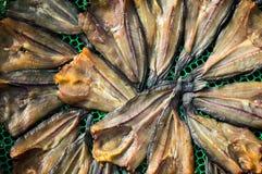 Ξήρανση των ψαριών Στοκ Εικόνες