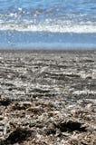 Ξήρανση φυκιών Broun στον ήλιο κοντά στο santorini Ελλάδα, κάθετο υπόβαθρο Μεσογείων άποψης Στοκ Φωτογραφίες