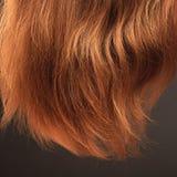 Ξανθά μαλλιά Στοκ Φωτογραφία