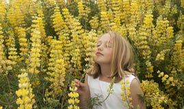 ξανθά wildflowers μυρωδιάς κοριτσιώ στοκ φωτογραφία