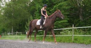 Ξανθοί θηλυκοί γύροι στο αραβικό άλογό της σε μια σειρά πρακτικής απόθεμα βίντεο