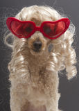 Ξανθός με τα κόκκινα διαμορφωμένα καρδιά γυαλιά ηλίου Στοκ εικόνα με δικαίωμα ελεύθερης χρήσης