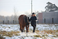 Ξανθό κορίτσι εφήβων και καφετί άλογο που τρέχουν στο χιόνι Στοκ Φωτογραφία