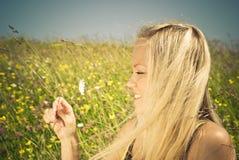 ξανθό camomile λιβάδι προκλητικό Στοκ Εικόνα