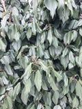 Ξεπερασμένα φύλλα στο υπόβαθρο τοίχων Στοκ εικόνες με δικαίωμα ελεύθερης χρήσης