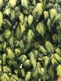 Ξεπερασμένα φύλλα στο υπόβαθρο τοίχων Στοκ φωτογραφία με δικαίωμα ελεύθερης χρήσης