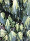 Ξεπερασμένα φύλλα στο υπόβαθρο τοίχων Στοκ Εικόνες