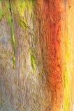 Ξεπερασμένη ξύλινη σύσταση υποβάθρου παραλιών μετα Στοκ εικόνες με δικαίωμα ελεύθερης χρήσης