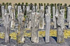 Ξεπερασμένοι ξύλινοι πόλοι Στοκ Φωτογραφία